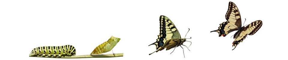 Evolution transformation